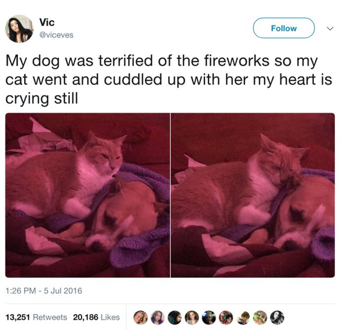 The Most Iconic Internet Cat Posts of All Time