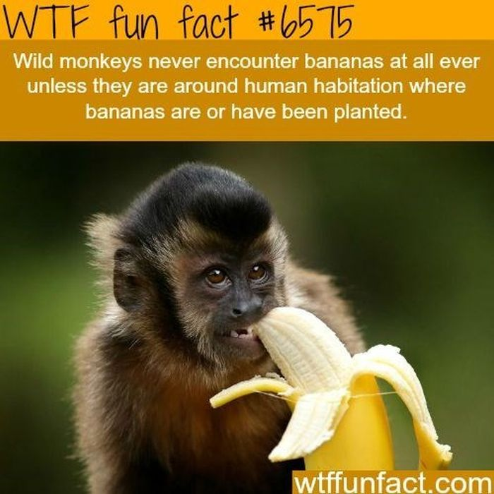 WTF Fun Facts, part 2