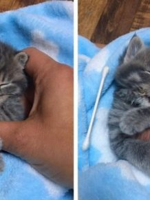 Woman Saves Orphaned Kitten With Extra Toes And Later Finds Her Sister Who Is Also A Polydactyl