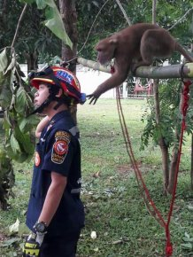 The Adorable Moment A Wild Monkey Is Rescued