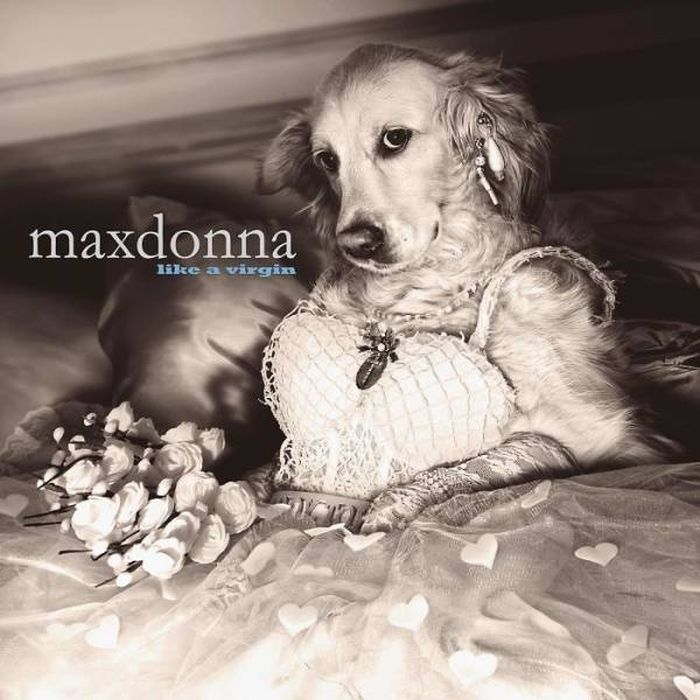 Madonna By Dogs