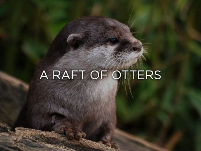 Proper Names For Groups Of Animals