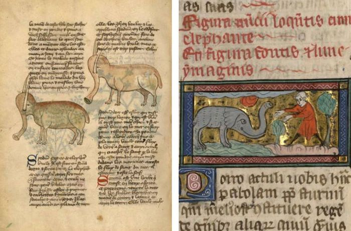 In The Middle Ages, The Drawings Were Made From Other People's Words. Figures Of Elephants