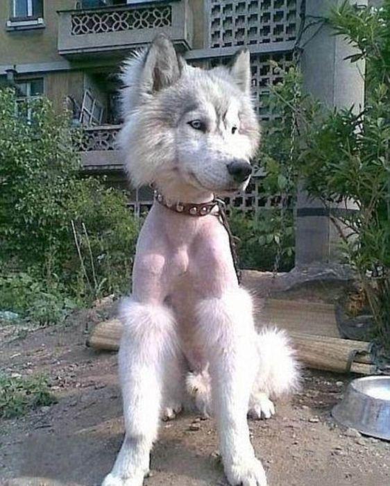 Funny Pet Haircuts