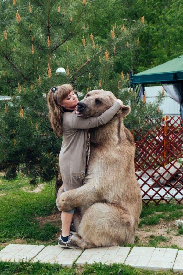 Russian Pet Bear