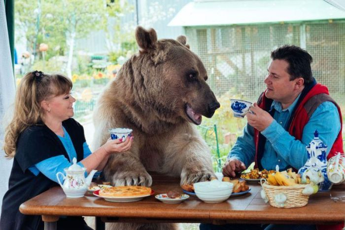 Russian Pet Bear