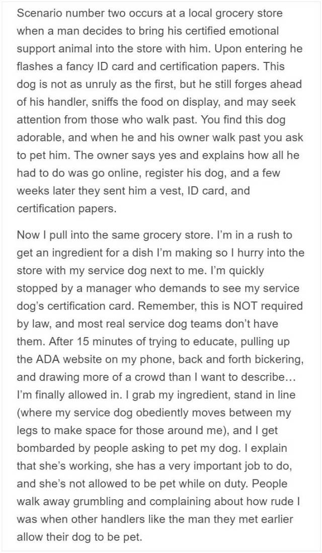 Service Dog Trainer Talks About Why Fake Service Dogs Are A Real Problem