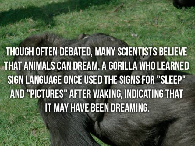 Facts That Are Too Crazy To Be True
