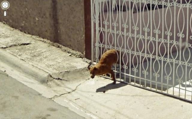 Animals On Google Street View