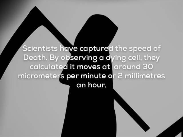 Facts That Sound Pretty Weird