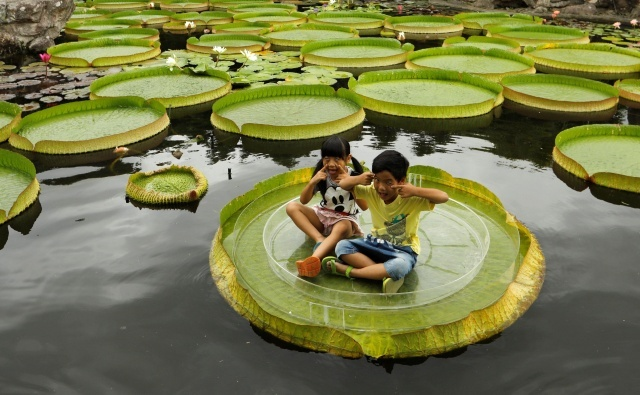 An Annual Event Dedicated To Lilies In Taipei