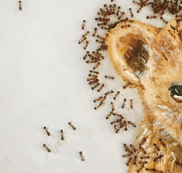 Paintings Made With Ants In Sugar