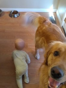 Father Illustrates The Friendship Between His Tiny Baby And Giant Dog