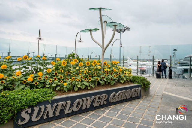 World's Best Airport In Singapore