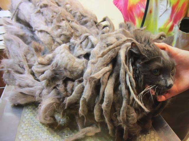 OMG, Take A Look At This Cat Before It Was Rescued