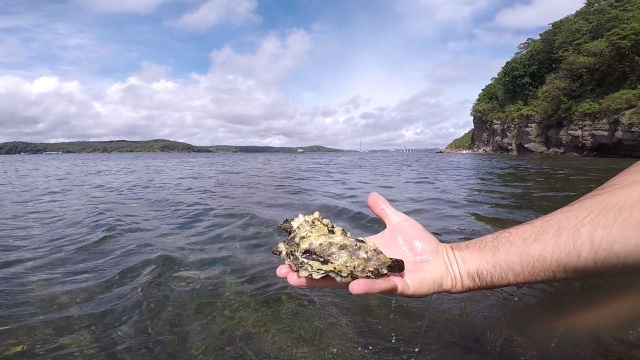 Catching Seafood