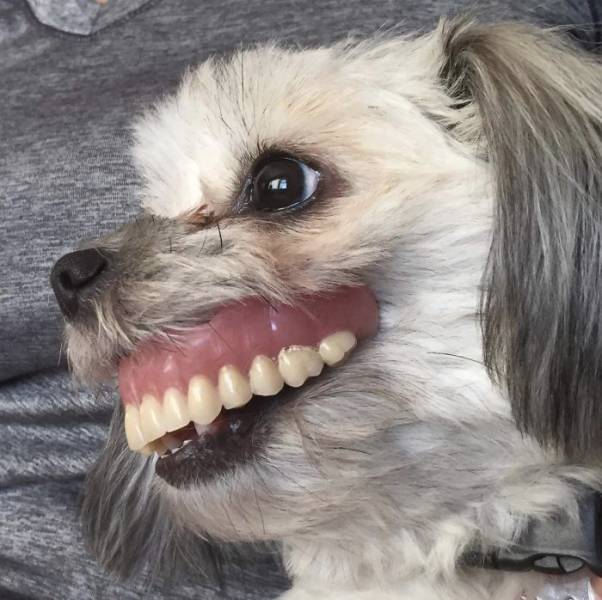 Never Leave Your Dentures When Your Dog Is Around