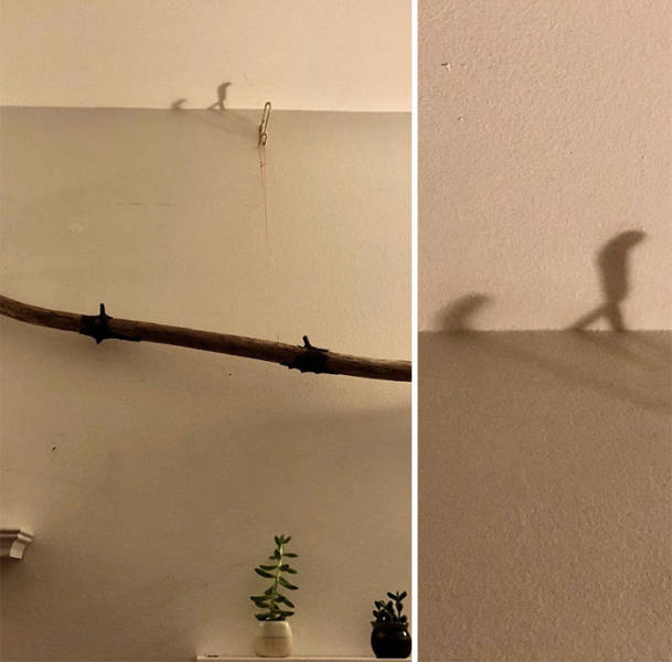 Shadows Can Be Interesting