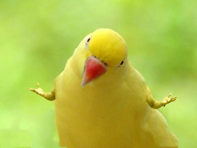 Funny Birds With Human Hands