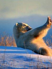 Comedy Wildlife Photography Awards