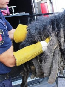 Dreadlocked Dog Saved