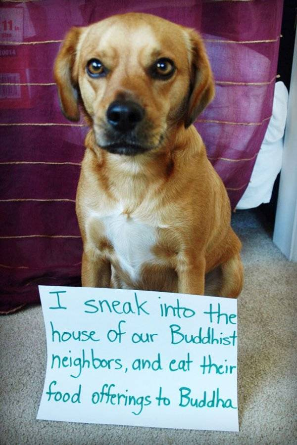 Dog Shaming, part 2