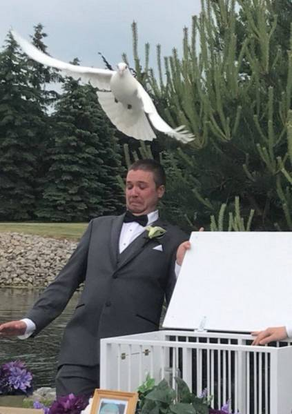 Photos With Perfect Timing, part 3