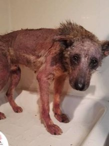 A Rescue Dog That's Almost Starved To Death Received A Second Chance