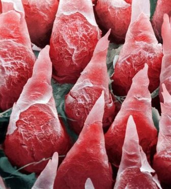 Our Body Through A Microscope