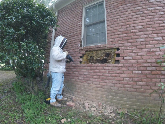 Removal Of A Honeycomb From A House Wall