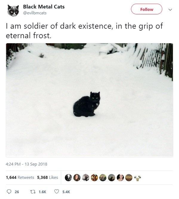 Black Metal Cats