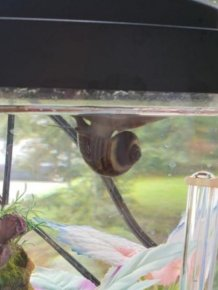 Snail Attached To The Surface Of The Water
