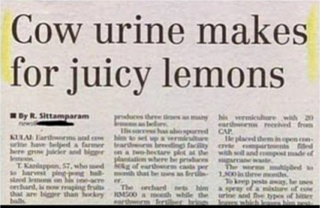 WTF Headlines