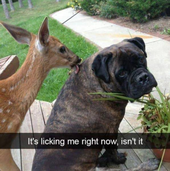 Funny Animal Photos On Snapchat