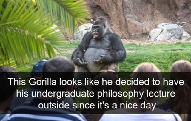 Funny Animal Photos On Snapchat