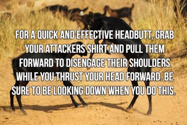 Useful Self-Defense Tips