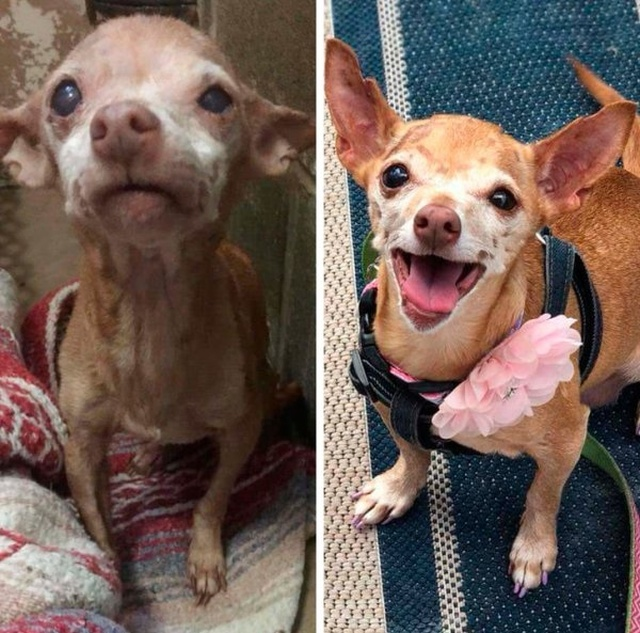 How Shelter Animals Have Changed