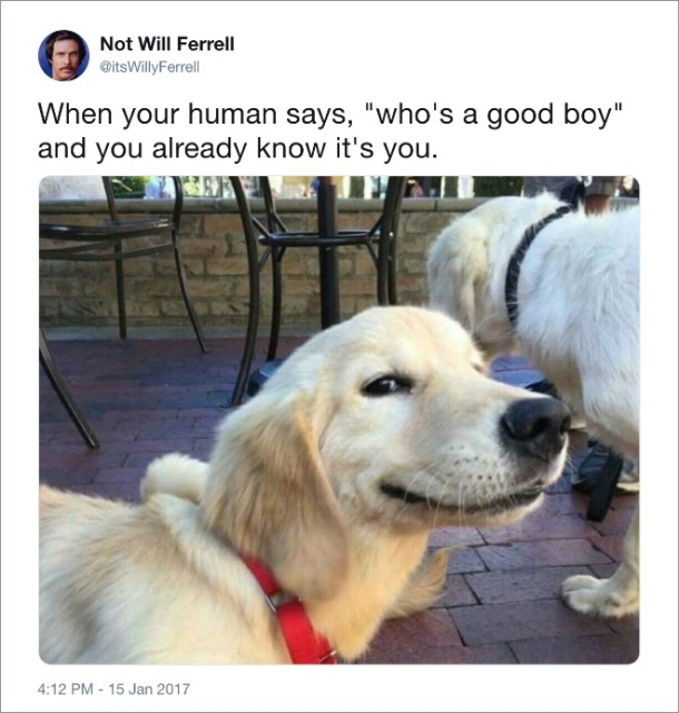 Funny Tweets About Dogs