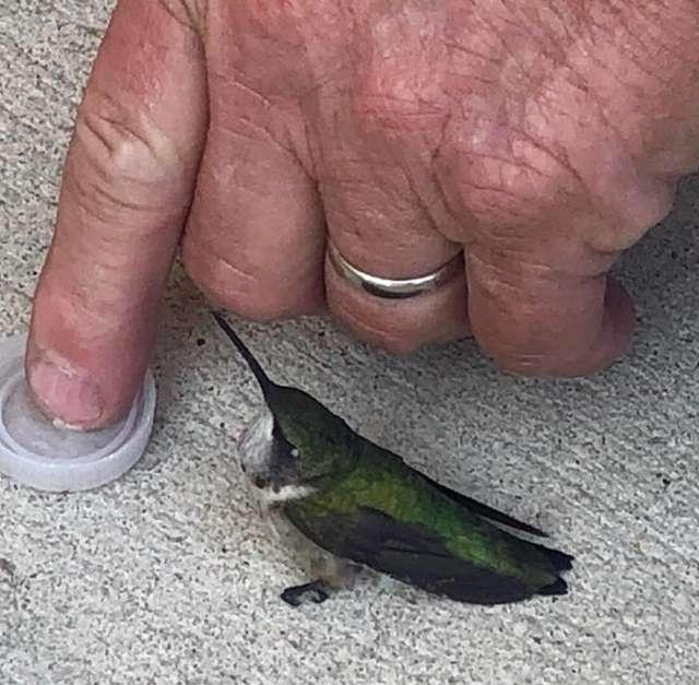 Rescuing A Hummingbird