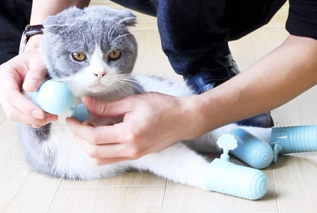 Strange Chinese Pet Accessory