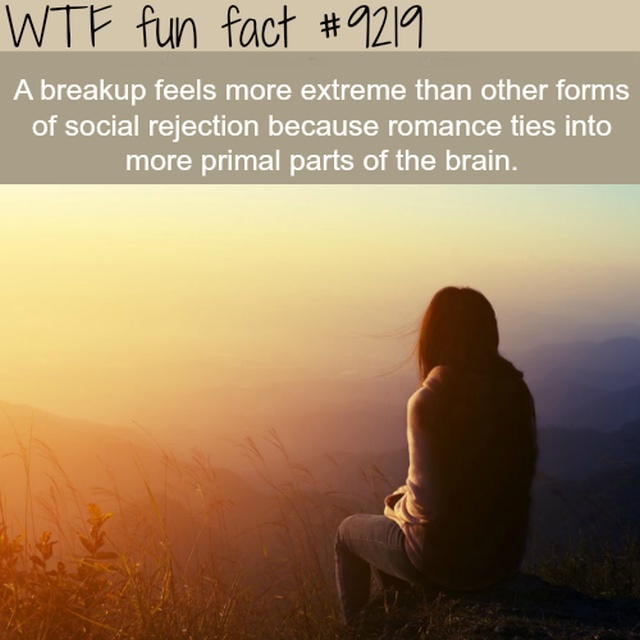Interesting Facts, part 41