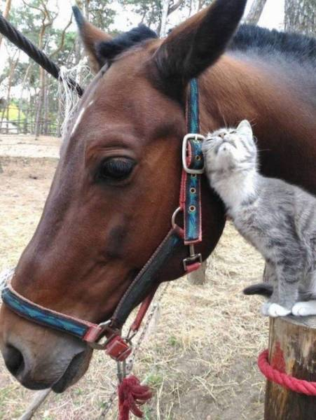 Funny Animals, part 51