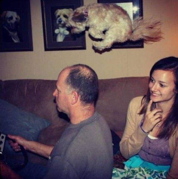 Perfectly Timed Photos, part 9