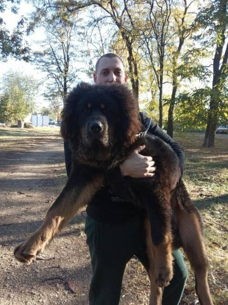 These Animals Are Way Bigger Than They Should Be