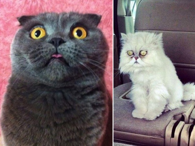 Surprised Cats