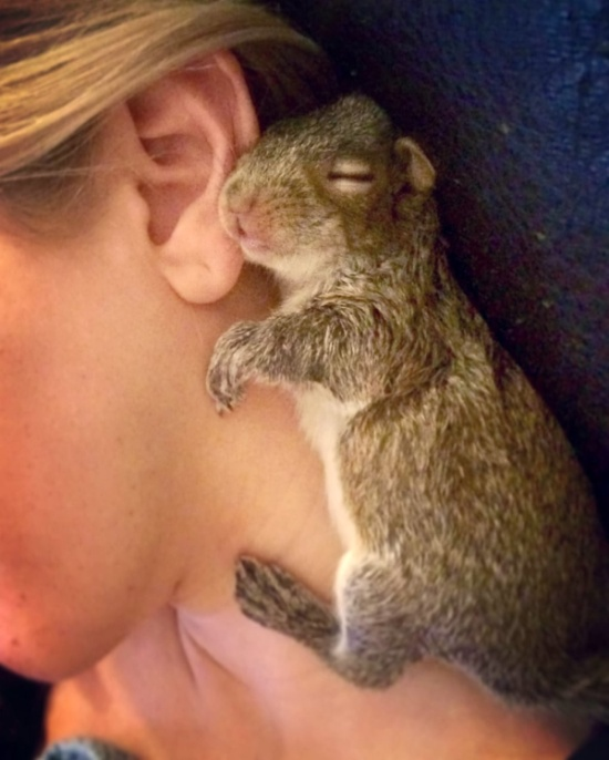 A Newborn Squirrel Was Found In New York Apartments