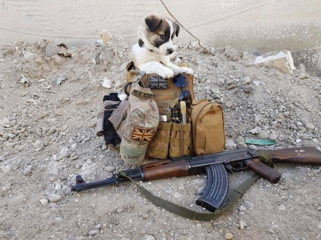 Soldier Saves A Puppy During Operation And It Turns To Be The Most Important Event Of His Life