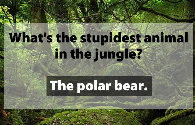 Stupid Jokes, part 2