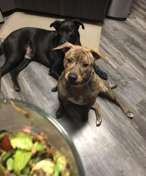 Begging Pets