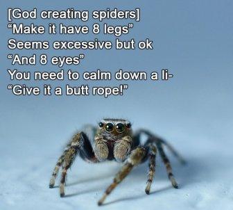 How God Created Animals
